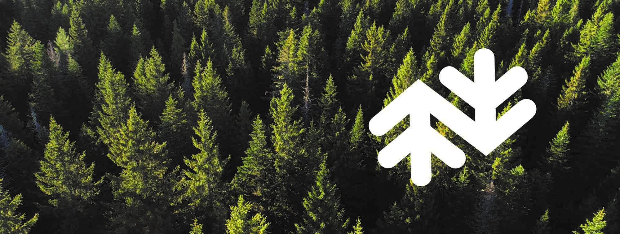 norske skog white logo in tree top background